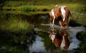 ©P.Romero New Forest Pony. Hampshire, UK (2009)