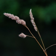 ©P.Romero: Meadow Grass, Hampshire, UK (2013)