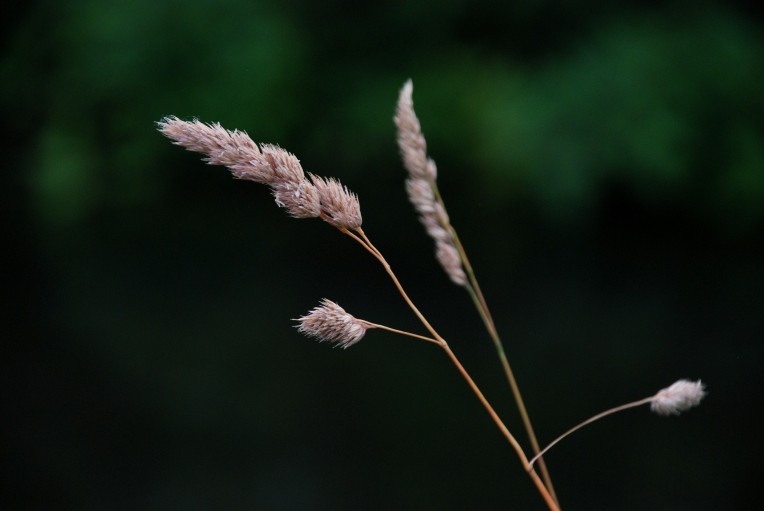 meadow-grass-2013