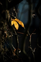©P.Romero: The Last Leaf Standing. Winchester, UK (2016)