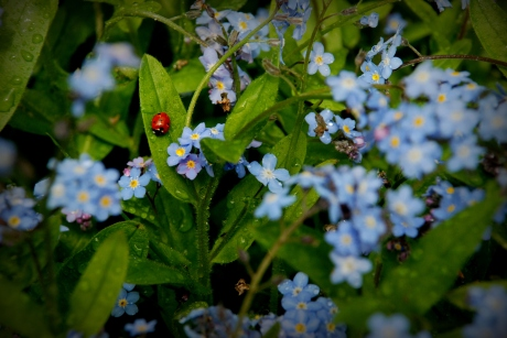 ©P.Romero: Ladybird. Winchester, UK (2014)