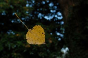 ©P.Romero: A suspended autumn leaf, Winchester, UK (2016)