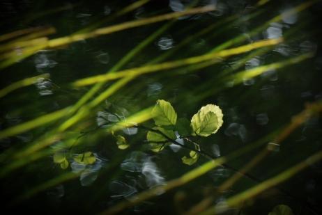 ©P.Romero: Somewhere by a river, England (2016)