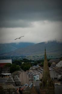 ©P.Romero: Herring gull flying over Caernarfon, North Wales (2016)
