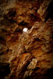 ©P.Romero: Fulmar in the cliffs of Tintagel, UK (2016)