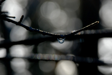 ©P.Romero: Raindrop. Plymouth, UK (2013)