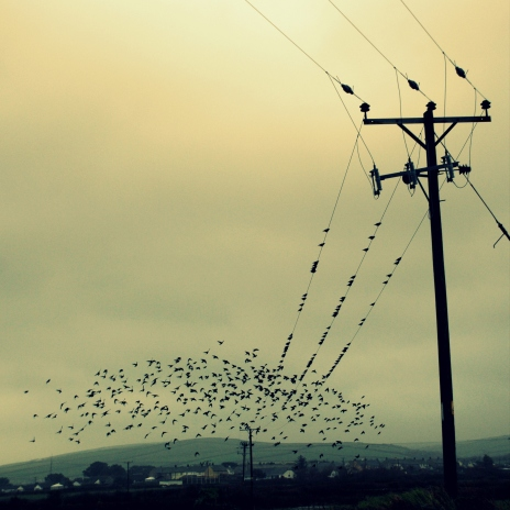 ©P.Romero: Murmuration of Starlings, Tintagel, UK (2015)