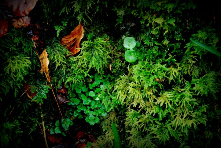 ©P.Romero: A collage of mosses, liverworts and fallen leaves, Devon, UK (2013)