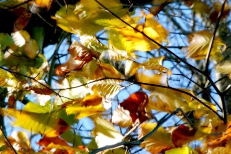 ©P.Romero:Autumn leaves dancing in the wind, Hampshire, UK (2017)