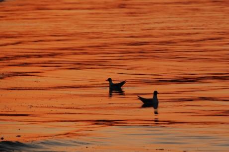 ©P.Romero: Sunsent over Studland Bay, Dorset, UK (2017)