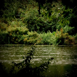 ©P.Romero: The Water Meadows, Winchester, UK (2017)