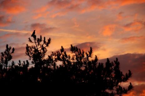 ©P.Romero: Sunrise over Winchester, UK (2016)