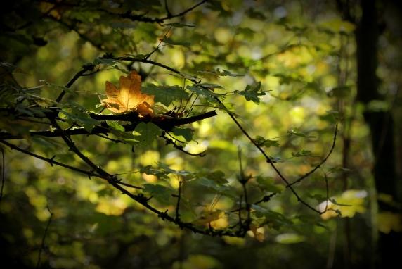 ©P.Romero: Autumn in Crabwood Forest. Hampshire, UK (2017)